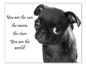 You are the sun_Black Pug Puppy