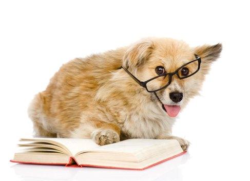 dog-reading-book-wearing-glasses.jpg