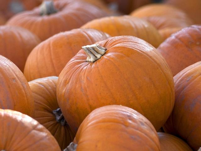 KNXV pumpkin_1416248605554_9647765_ver1.0_640_480
